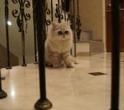 Котик и лестница